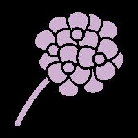icone-geranium
